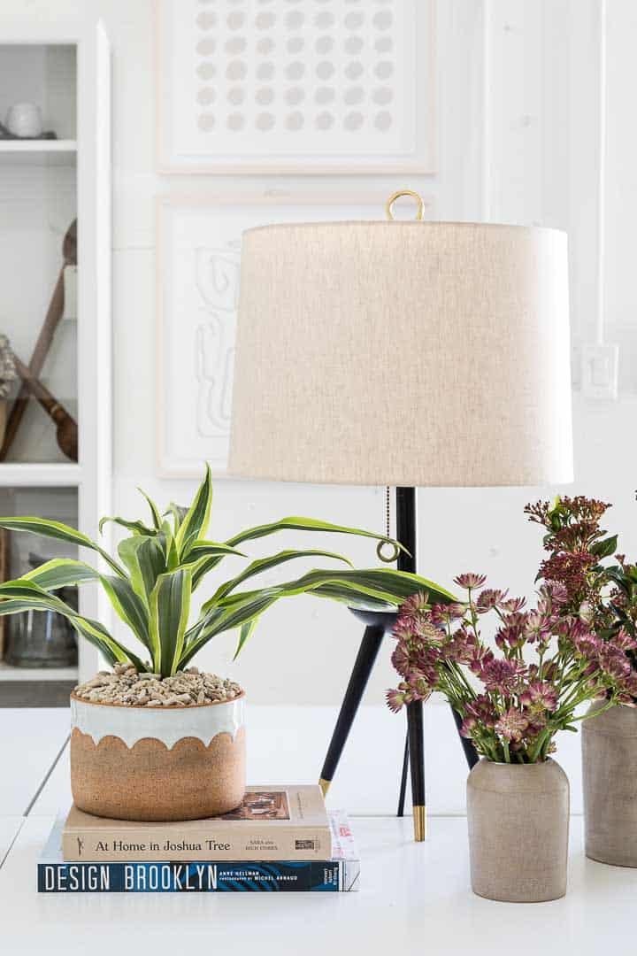 House Plant Shop Image